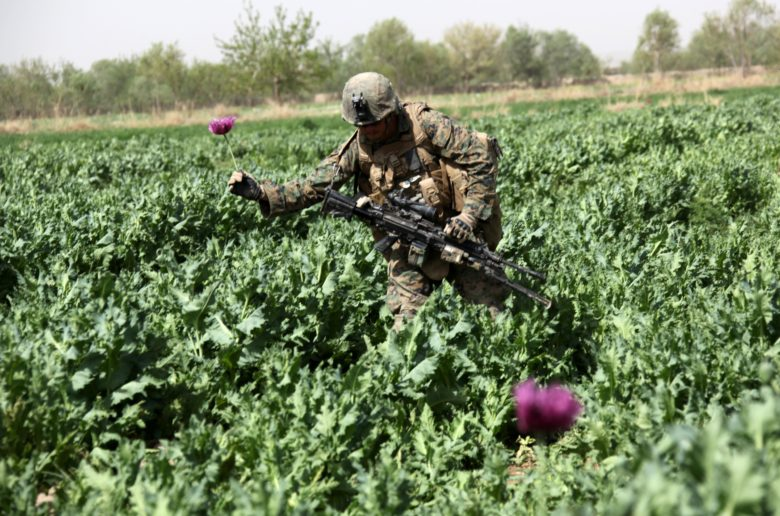U.S. Marine Corps Lance Cpl. Anthony Duncan, a M249 Squad Automatic Weapon gunner with 2nd Platoon, Company I, Battalion Landing Team 3/8, Regimental Combat Team 8, picks a poppy flower while returning from a security patrol through a poppy field in Helmand province's Green Zone, west of the Nahr-e Saraj canal, March 25. Elements of 26th Marine Expeditionary Unit deployed to Afghanistan to provide regional security in Helmand province in support of the International Security Assistance Force.