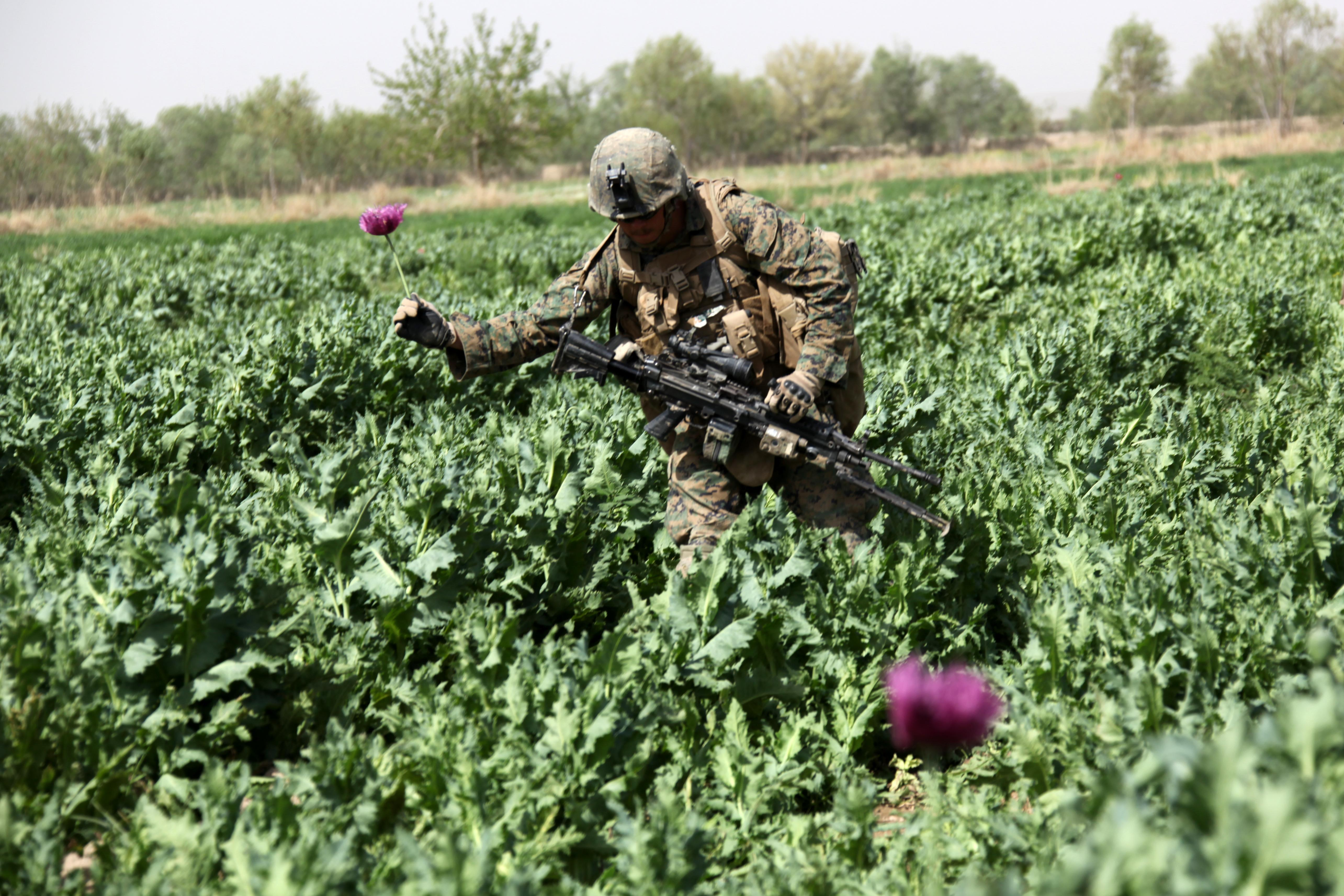 Us Involvement In Afghan Poppy Fields The Generation